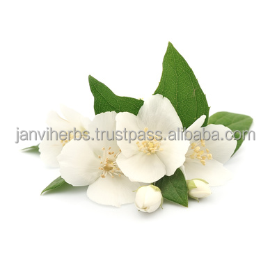 100% Pure Natural With Private Labeling Jasmine Grandiflorum Essential Oil