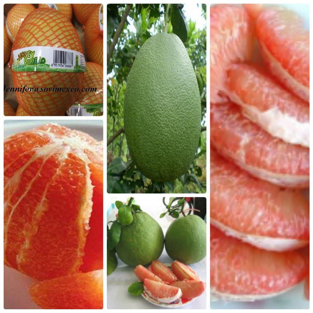 SWEET POMELO FRUIT FROM VIETNAM EXPORTER