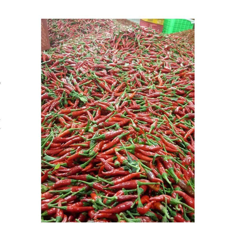 Chili Pepper/ CHILI with best prices