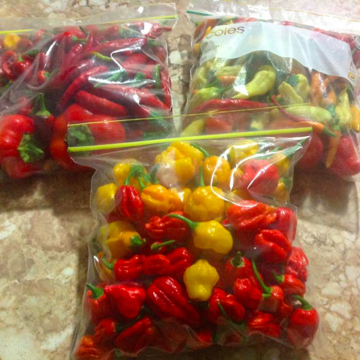Fresh hot chilli and pepper now available for exportation on 30% discount sale