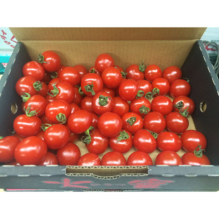 Best quality fresh bulk tomatoes very sweet and popular in market