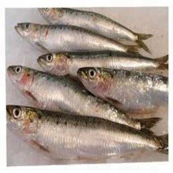 Frozen Sardine Fish 80-100 Frozen Seafood