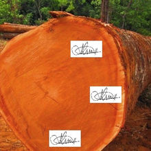 Hot sales price Mahogany round logs 500 - 600mm