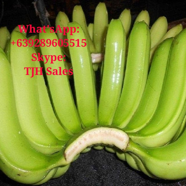 Cavendish Banana What'sApp +639289605515