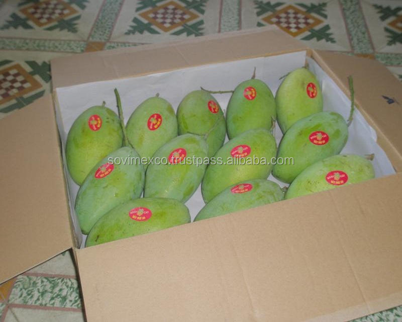 GREEN MANGO FROM VIETNAM SELLER