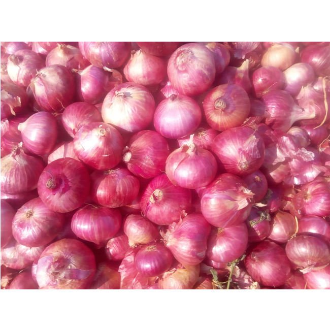 Best Stock 2018 Bulk 100% Fresh Indian Onion at Low Prices