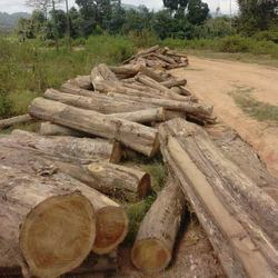 TEAK WOOD LOGS TEAK SAWN TIMBER