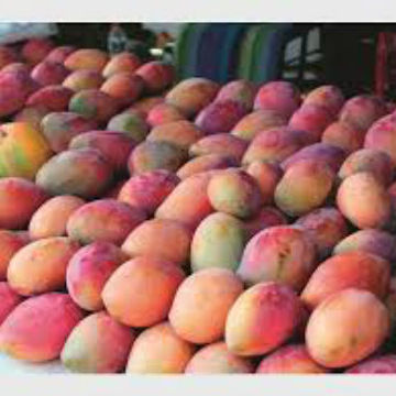 Fresh Quality South African Mangoes