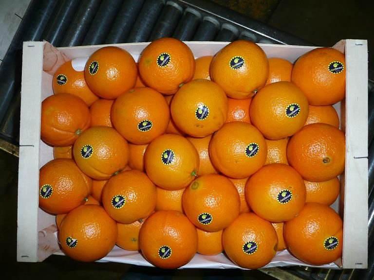Пупок-lane late Апельсины