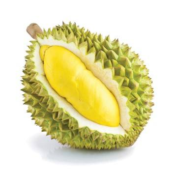 Fresh Durian from Thailand Premium Grade
