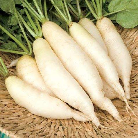 Natural Fresh White Radish For Sale