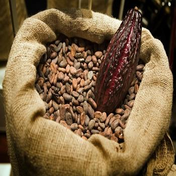 Dried Raw Cocoa Beans for Sale