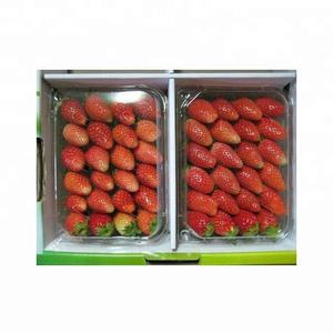 Fresh Strawberry / Indian Strawberry / Export Quality Strawberry