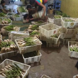 Fresh green Asparagus competitive price supplier From tanah Karo North Sumatra