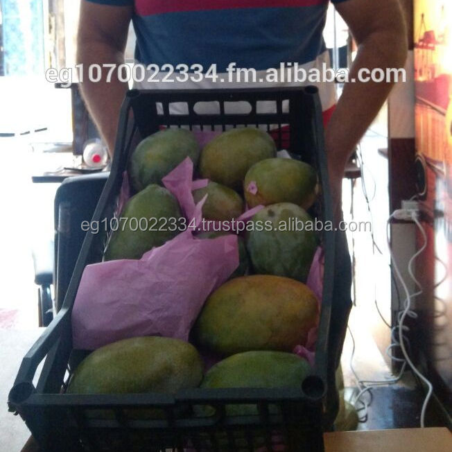 FRESH MANGO , export fresh fruits from egypt