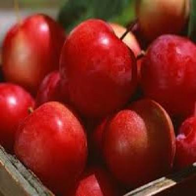 New Crop Red Gala Apple/Chinese Apple fruit/Gala