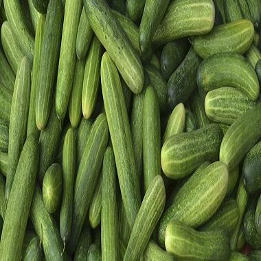 Fresh Cucumber/ Fresh vegetable cucumber