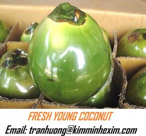 FRESH YOUNG COCONUT/COCONUT FRUIT/ FRESH COCONUT