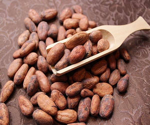 Certified Best Wholesale price Cacao Beans +Dried Criollo Cocoa Beans +Dried Fermented Cacao +Dried