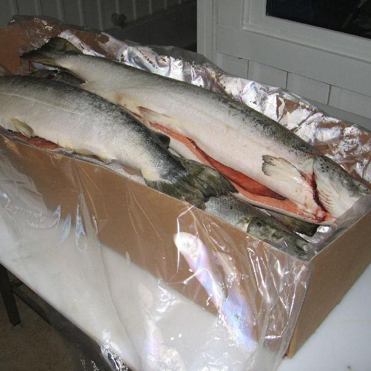 Offer Chilean Atlantic Salmon
