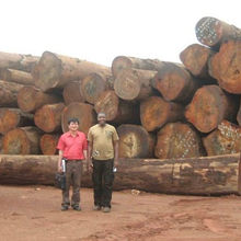 HOT SALES OKAN LOGS AND SAWN WOODS FOR EXPORT,,