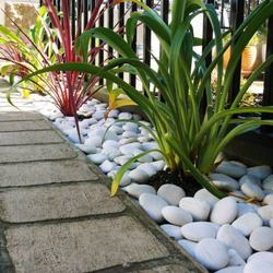 Best selling Indonesia natural cream pebble stone for water feature