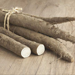 fresh burdock roots for sale