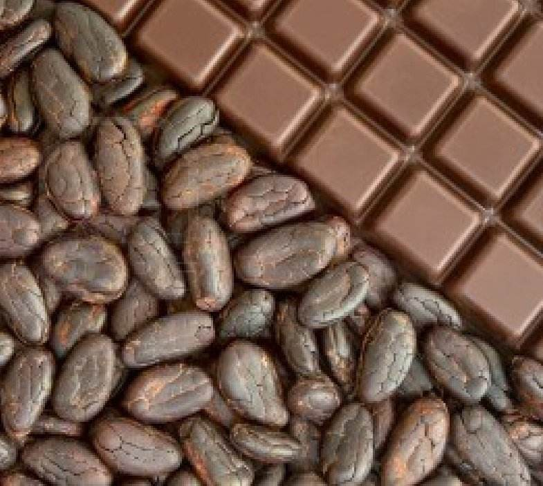 Ghana Cocoa bean and Dried cacao Beans