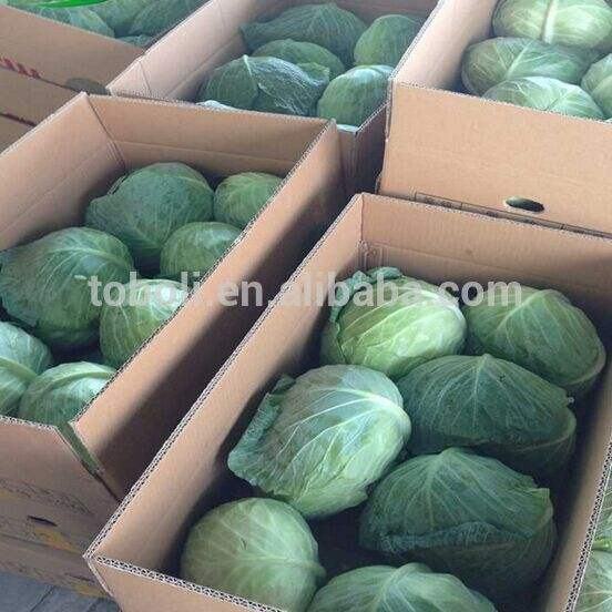 Fresh green cabbage/Cabbage from China/New crop cabbage