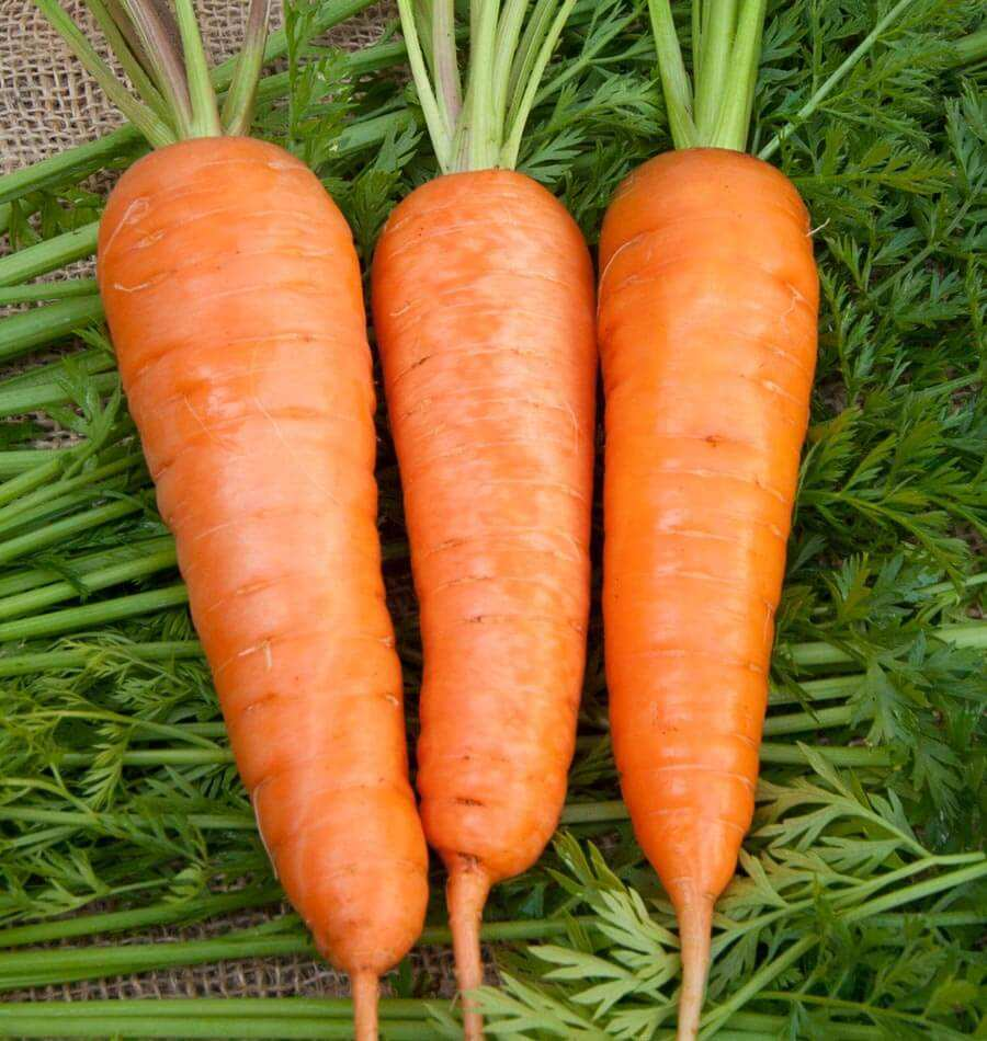 100% FRESH NATURAL CARROT