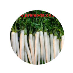 Standard Quality Fresh Radish Exporter from India