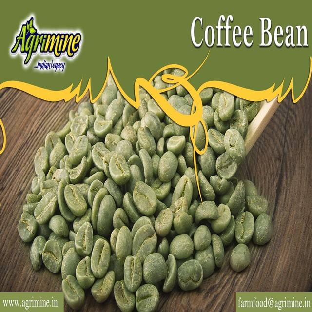 INDIAN COFFEE BEAN WHOLE SELLER