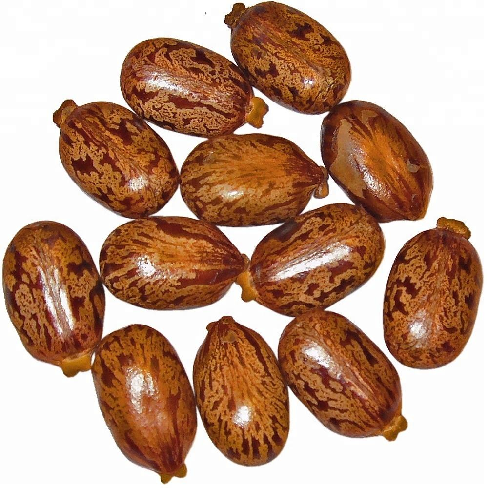 Castor oil seeds for sale high quality -Whatsapp :+91 9791042002