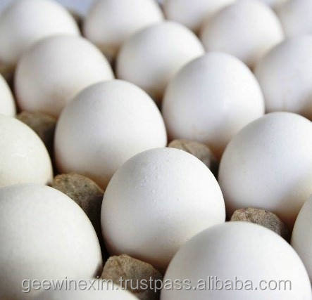 Quality Chicken Eggs
