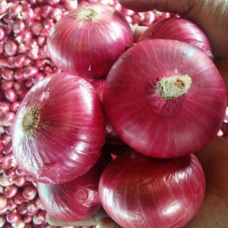 Fresh Red Onion +918371975707