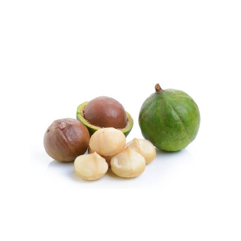 wholesale Raw/ Roasted Macadamia nuts price