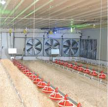 fan/fans Animal Husbandry Equipment from China broiler chicken layer eggs farm