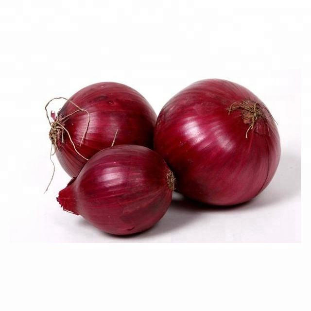 Fresh Onion / Fresh Red Onion / Onion Supplier In India
