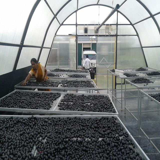 FRESH BLACK JAMUN FRUIT....,,