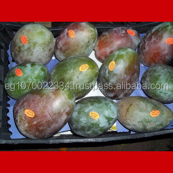 EGYPT FRESH MANGO red , yellow , green , export fresh fruits from egypt