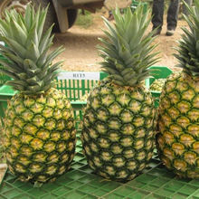 FRESH PINEAPPLE WITH HIGH QUALITY AND THE BEST PRICE