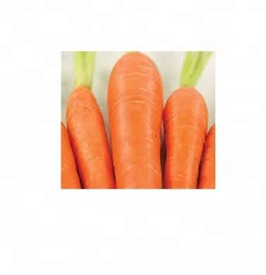 Fresh Carrots,Frozen Fresh Carrot,Red Fresh carrot