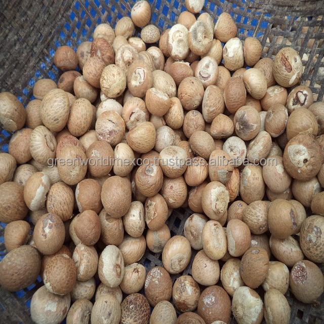 DRIED WHOLE BETEL NUT WITH HIGH QUALITY