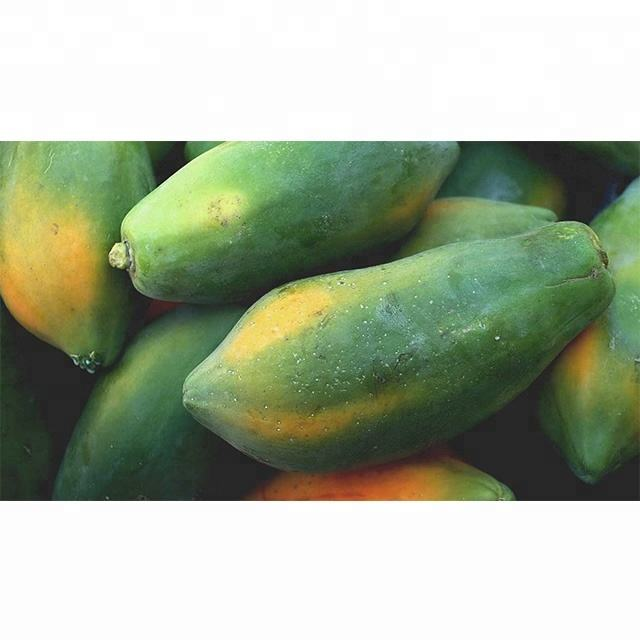 Wholesale Fresh Papaya / Papaya Fruit Price / Fresh Papaya Fruit In India
