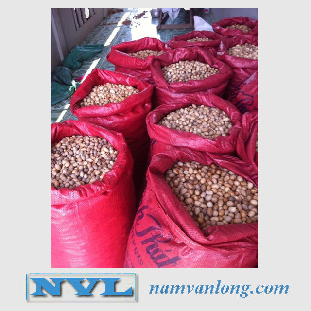 TOP QUALITY ! OFFER Dried Betel Nuts With High Quality And Competitive Price 2021
