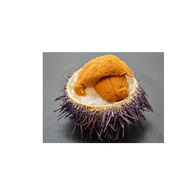 frozen sea urchin