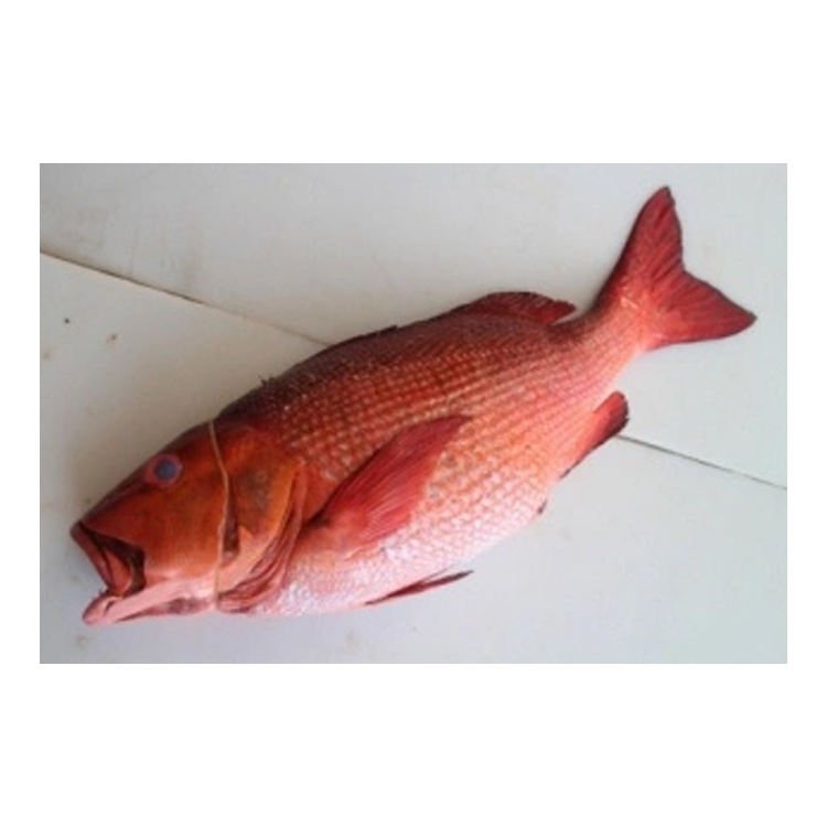 Wholesale Supplier of Natural Taste Frozen Red Bass Fish Fillet