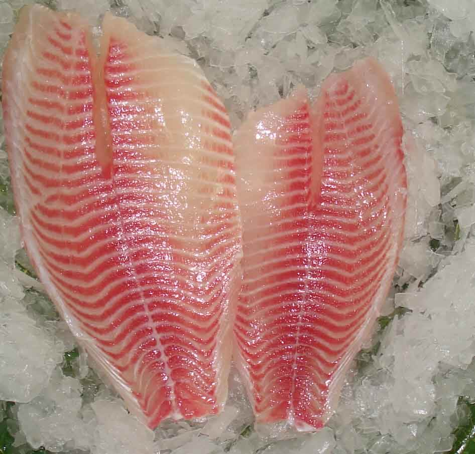 Frozen Red Tilapia Fish/ Red Tilapia Frozen Fillet