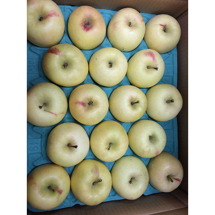 Best quality fresh delicious white apple fruit from Japan