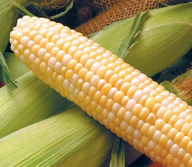 High-quality yellow market prices nutrition corn